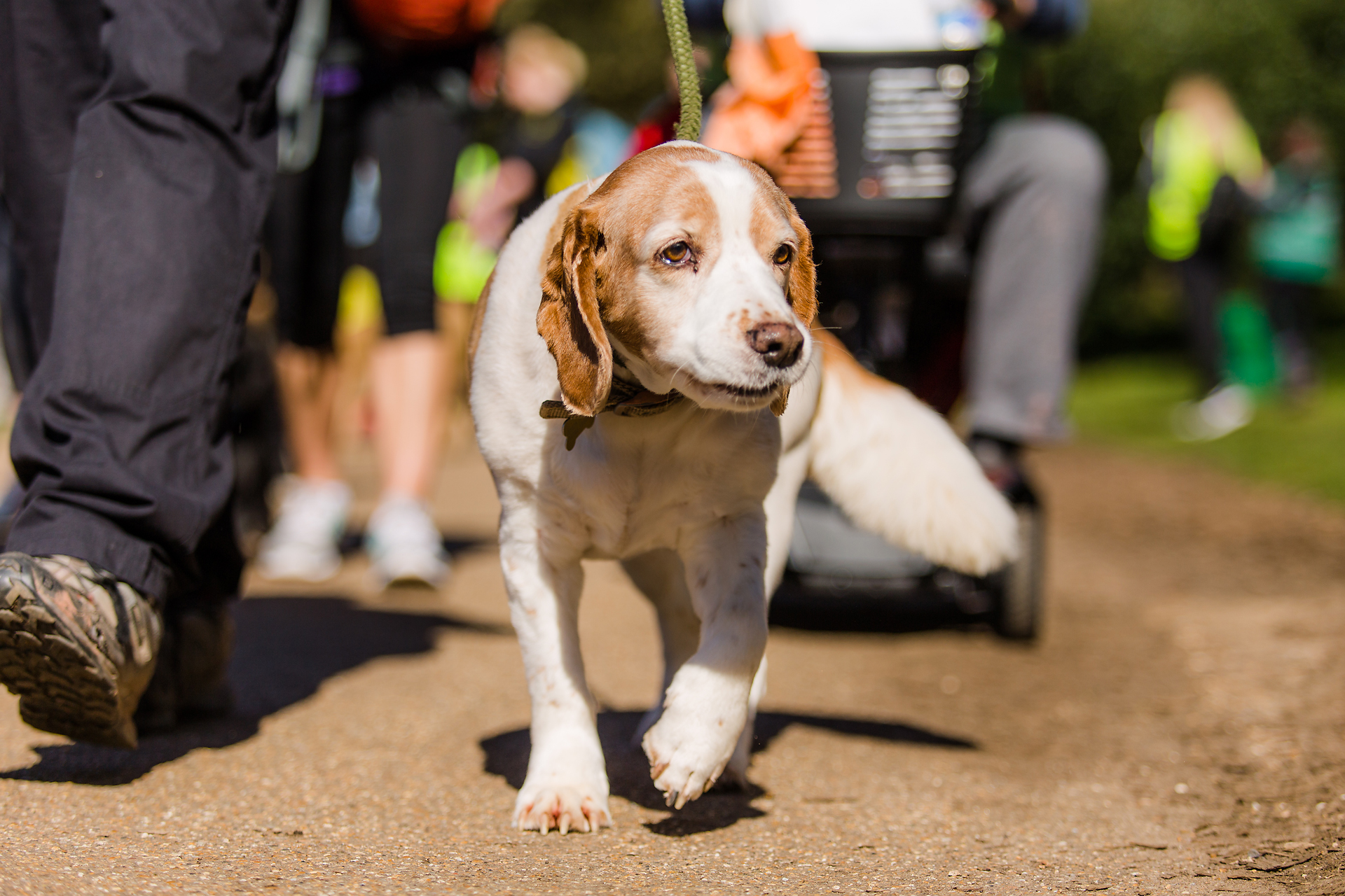 Cardiff Dog Walk